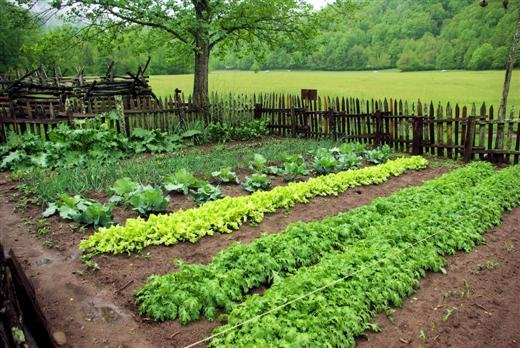 Backyard Farmers And Home Gardeners : Photo album created with Web Album Generator